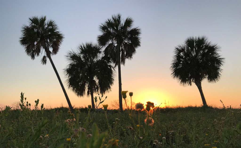 Photo of palm trees during sunrise in Pensacola, Florida